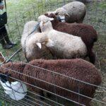 Wool Arts Tour
